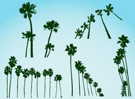 Palm Trees Vectors