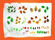 Vector Leaf Assortment