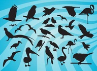 Bird Silhouette Vectors