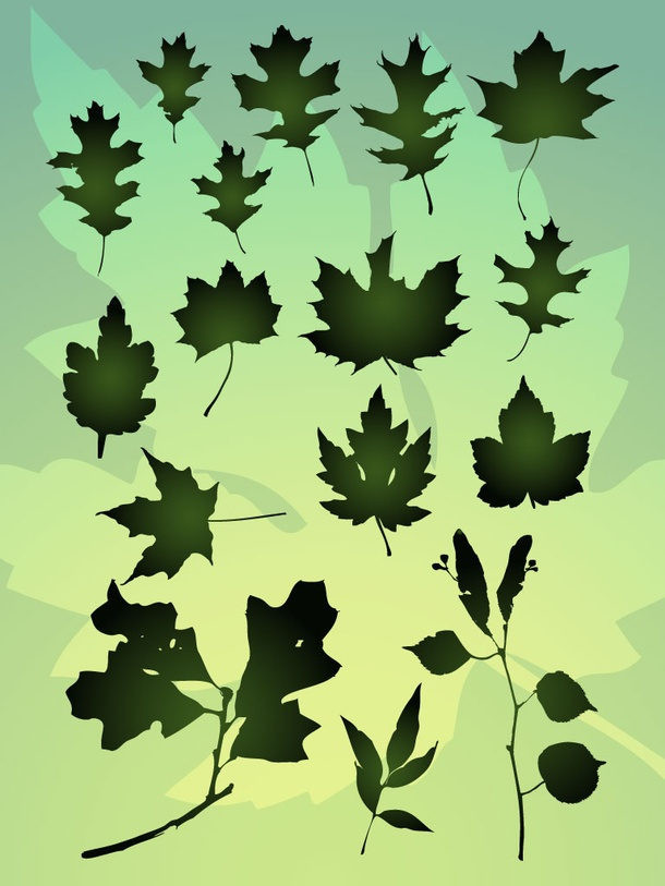 Vector Leaf Bundle