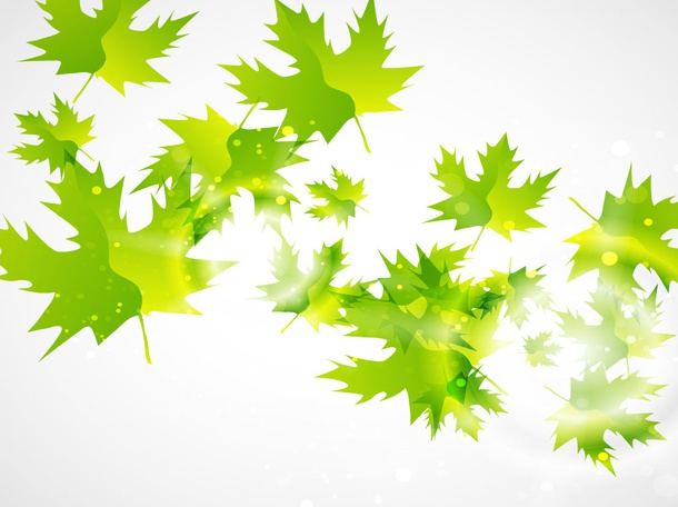 Maple Leaf Vectors