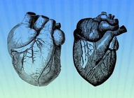 Detailed Heart Vectors