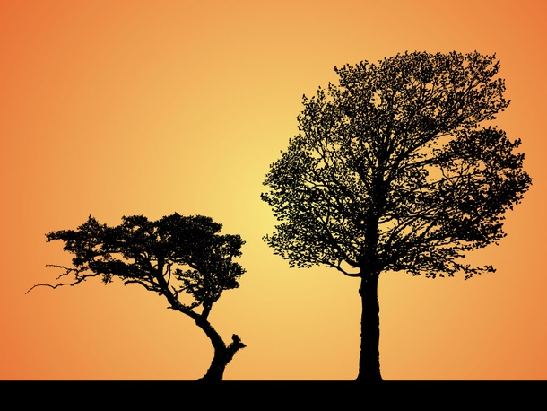 Trees Sunset Silhouettes