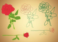 Roses Illustrations