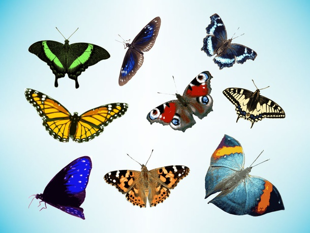 Real Butterfly Vectors