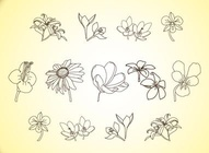 Vector Flower Line Illustrations