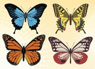 Colorful Butterfly Vector Set