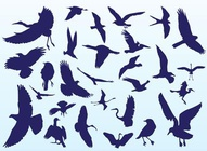 Bird Silhouettes In Flight