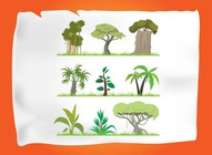 Jungle Cartoon Tree Graphics