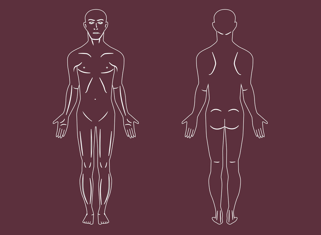 Human Body Vector Art Human Body Vectors