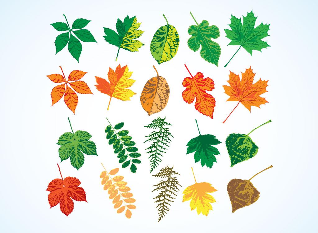 Leaf Designs