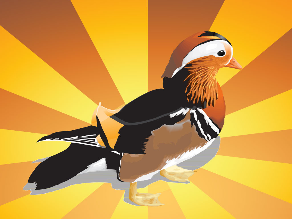 Mandarin Duck Illustration