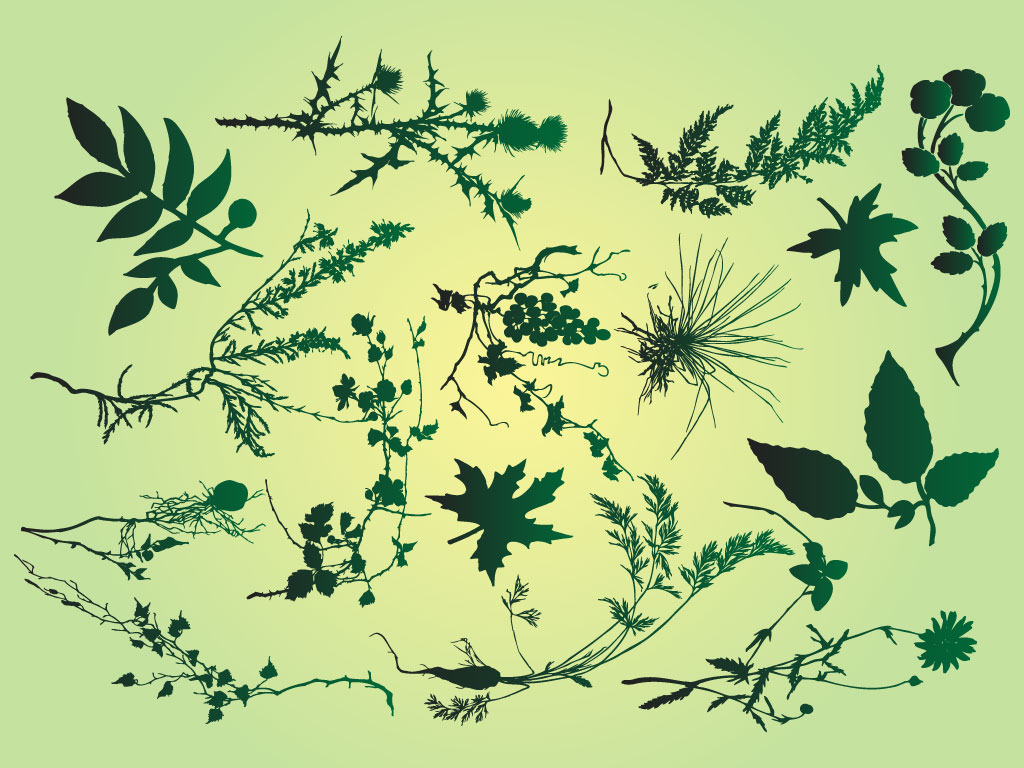 This Cool Graphic Pack Is Full Of Branches, Vines And Leaves All In  Detailed Vector Silhouettes. Great Graphics For Invitations, Garden Designs  And ...