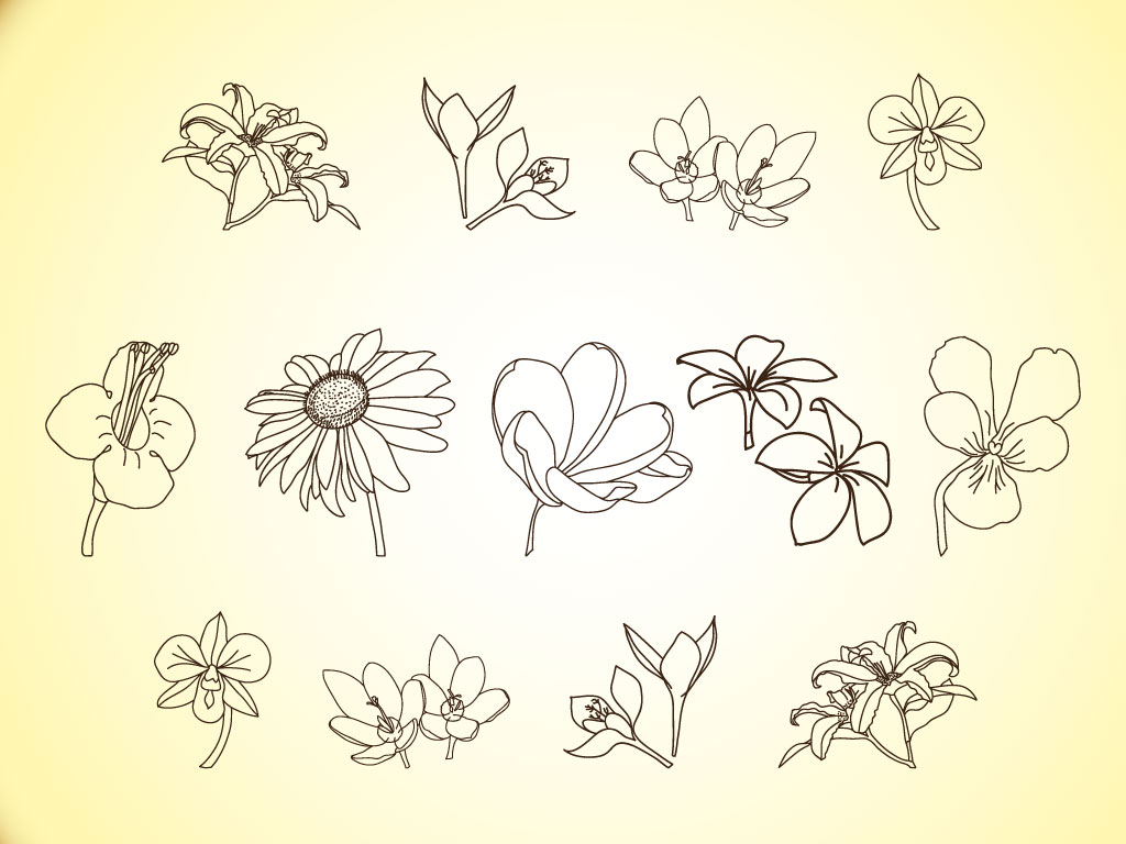 Vector Line Drawing Flower Pattern : Vector flower line illustrations